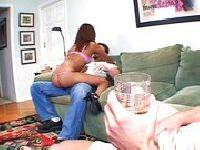 Pijana suka wskoczyła na byczka