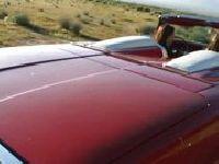 Perwersyjna suka w samochodzie